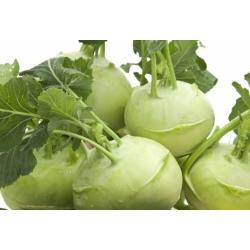 "Kohlrabi ""Gigant"" - أخضر متألق باهت ، تشكيلة كبيرة جدًا - بذور مغلفة - 100 بذرة - Brassica oleracea var. Gongylodes L. - ابذرة"