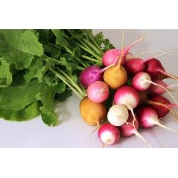ترکیبی از انواع تربچه - ریشه های دور - SEED TAPE - Raphanus sativus L. - دانه