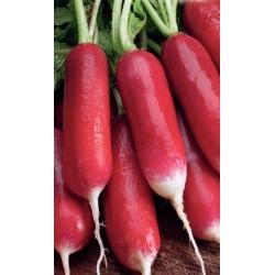 "Radish ""Flamboyant 2"" - scarlet, white-tipped roots - 425 seeds"