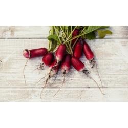 "Radish ""Warta"" - medium long variety - 425 seeds"