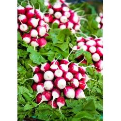 "Radish ""Scarlet with white tip"" - 425 seeds"