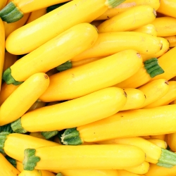 Puhmik - õlikõrvits - Atena  Polka - 100 grammi - 1000 seemned - Cucurbita pepo