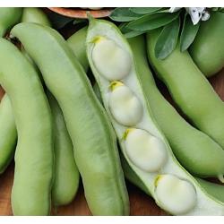 Põlduba - Bonzo - Vicia faba L. - seemned