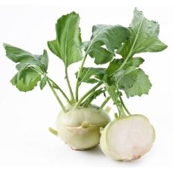 """Kohlrabi """"Wener White"""" - 520 بذرة - Brassica oleracea var. Gongylodes L. - ابذرة"""