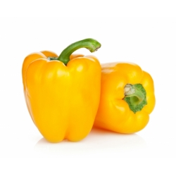 """Pepper """"Telimena"""" - dark yelloww fruit with thick walls, for tunnel cultivation - 85 seeds"""