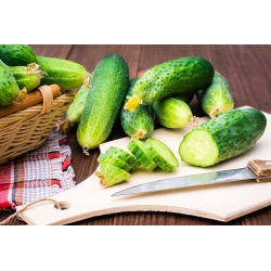"""Cucumber """"Victoria F1"""" - field variety with vividly green fruit with small warts - 175 seeds"""