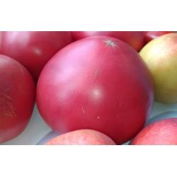 Tomat - Raspberry Vintage - Lycopersicon esculentum Mill  - seemned
