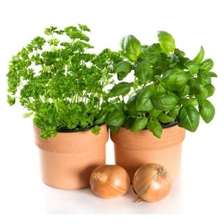 Sprouting seeds - Basil - 3250 seeds