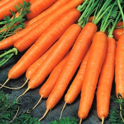 """Carrot """"Arleta"""" - extremely productive variety ideal for juices - 4250 seeds"""