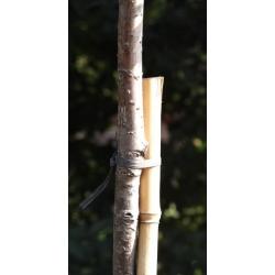 Buluh buluh - 12 - 14 mm / 75 cm - 5 keping -