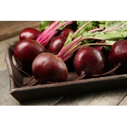 """Beetroot """"Sycamore"""" - round, productive variety - 500 seeds"""