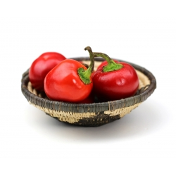 """Pepper """"Alexander"""" - dark red, tomato-type variety for field and tunnel cultivation - 65 seeds"""