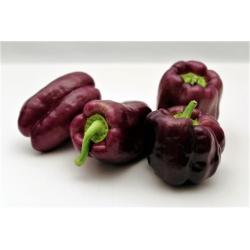 """Pepper """"Ingrid"""" - dark brown variety producing large fruit"""