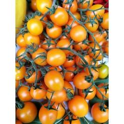 Tomat -  Citrus Grape - Lycopersicon esculentum Mill  - seemned