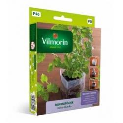Mini Garden - Lemon balm - starter set for indoor cultivation - 600 seeds