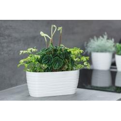 "Pot tanaman panjang ""Sahara petit"" dengan baki - 27 x 13 cm - putih -"