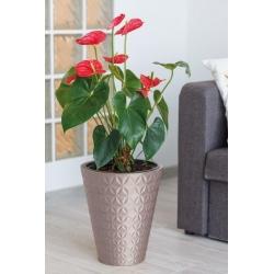 """Diament"" round plant pot with an insert - 30 cm - white"