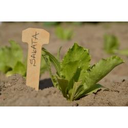 Keskkonnasõbralike puittaimede etiketid - 5 tükki -