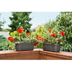 Caja de cultivo de flores Lamela con platillo - 50 cm - gris antracita -