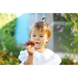 Õnnelik aed - 315 seemned - Tagetes patula nana