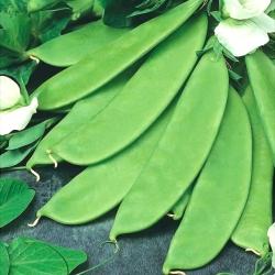 """Sugar snap pea """"Bajka"""" - late variety; treated seeds - 4 seeds"""