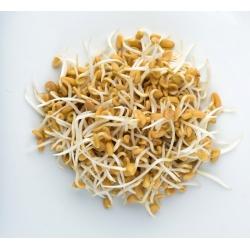 بذر بذر - XL مجموعه - 8 قطعه + بذر با 3 سینی -  - دانه