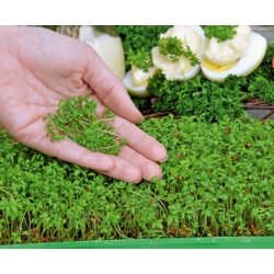 Microgreens - Spring breakfast - ideal for breakfast - 6-piece set with a growing container