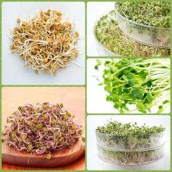 Benih kecambah - Campuran panas - set 3 potong + sprouter dengan satu baki -  - biji