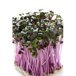 Sprouting seeds - Mild mix - 5-piece set
