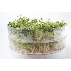 Прорастание семян - Mild MIX - набор из 5 штук + росток с 3 лотками -  - семена