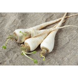 Aedpetersell - Halblange (Eagle) - granuleeritud seemned - 300 seemned - Petroselinum crispum
