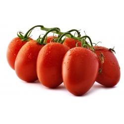 """Tomato """"Cencara F1"""" - greenhouse, tall variety"""