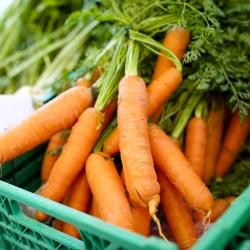 2 در 1 - نان هویج + تربچه چند رنگی - SEED TAPE -