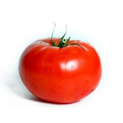 """Tomato """"Giant"""""""