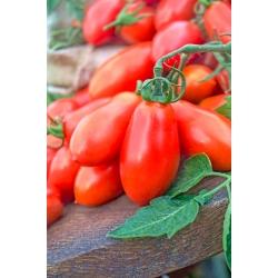 "Tomato ""Big Mama F1"" - tall, greenhouse variety"