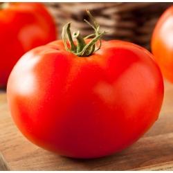 "Greenhouse tomato ""Octavian F1"""