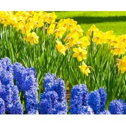 Jonquil and blue hyacinth set – 29 pcs