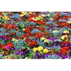 Primrose, forget-me-not and garden pansies - seeds of 6 flowering plants' varieties