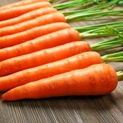 "Carrot ""Nantes 3"" - medium early variety - PELLETED SEEDS - 400 seeds"