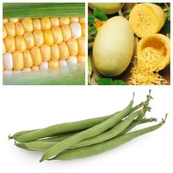 Köögiviljad vahekäigu jaoks - Määra nr. 3 - 3 liigi seemned -