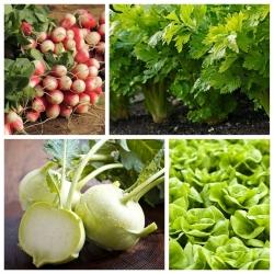 Köögiviljad vahekäigu jaoks - Määra nr. 5 - 4 köögiviljaliigi seemned -