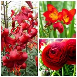 Pengaturan merah - Pemilihan 3 spesies tanaman - 54 pcs -