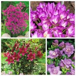 Lila-virágos növények kiválasztása - 4 faj - 100 db -