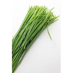"Spring onion ""Bohemia"" - 1700 seeds"