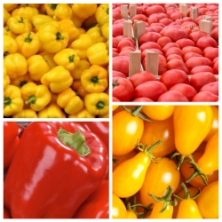 Pepper + tomato - seeds of 4 vegetable plants' species