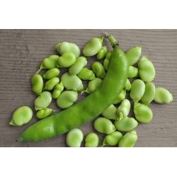 Broad bean 'Bizon' - early variety