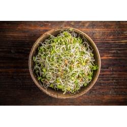 Hạt giống nảy mầm BIO - hỗn hợp mặn - Hạt hữu cơ được chứng nhận -