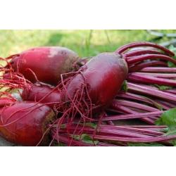 BIO Red củ cải đường kéo dài - Hạt giống hữu cơ được chứng nhận - Beta vulgaris