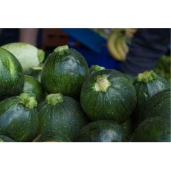 Courgette 'Tondo di Piacenza' - early, productive variety; zucchini