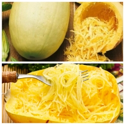 Labu spaghetti - set benih varietas 2 tanaman sayuran -  - biji